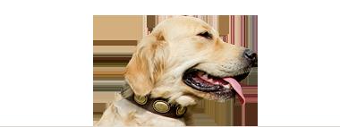 Boutique collier pour chien