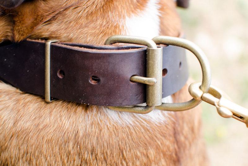 Collier chien bulldog anglais en cuir original confort - Collier pour chien original ...