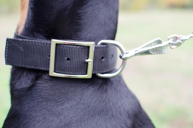 boucle de collier pour chien