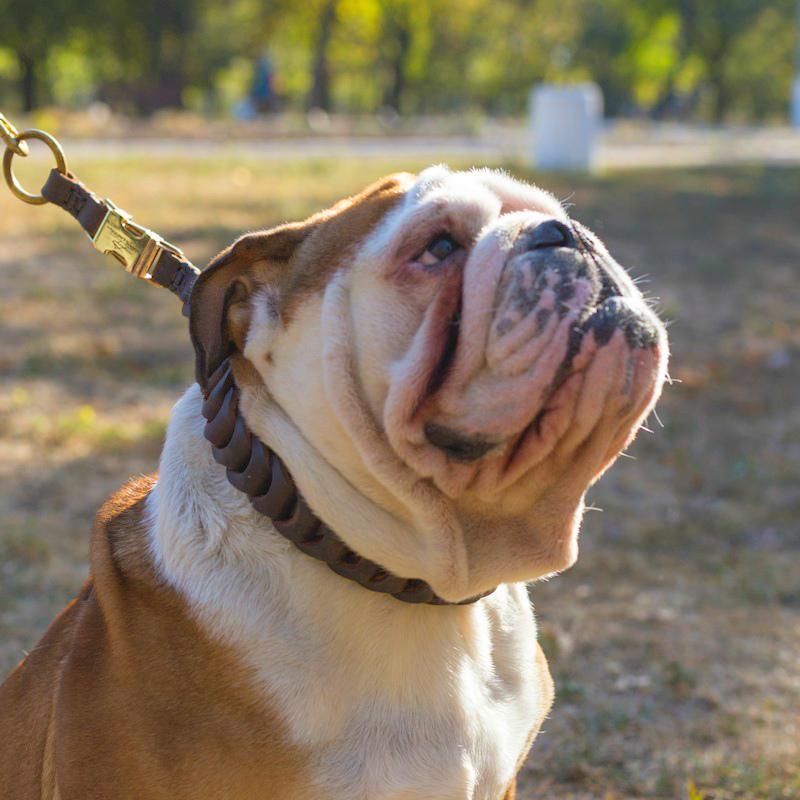 collier pour chien en anglais