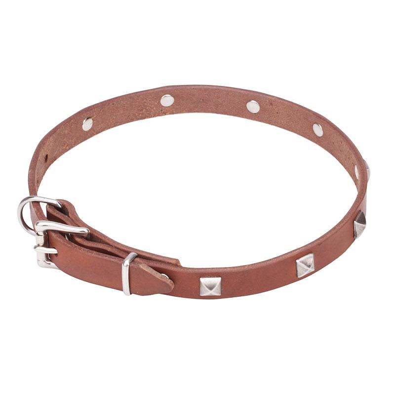 collier fantaisie pour chien pas cher