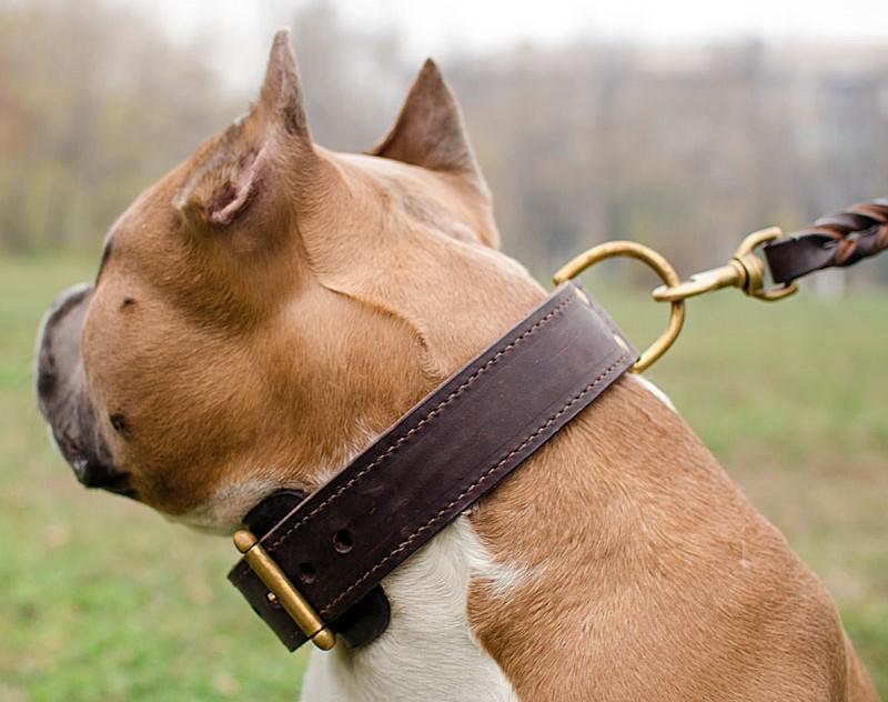 Collier large en cuir pour chien staffie double couche c33nh - Couche pour chien femelle ...