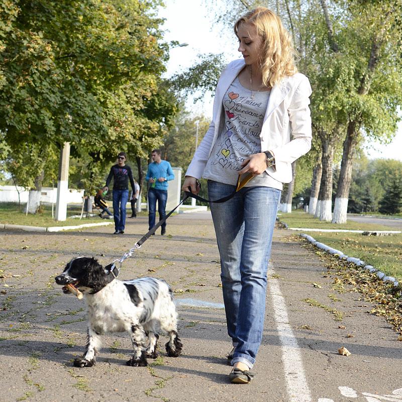 collier pour chien breton