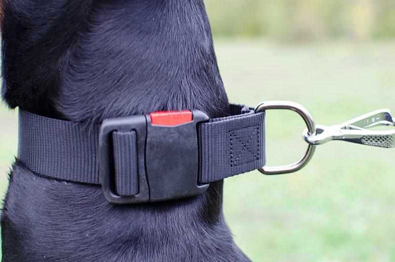 Collier reglable «Ergonomie» pour chiot et chien Dobermann